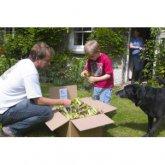 Instant Windowbox Vegetable Garden