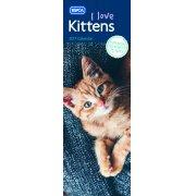 RSPCA Kittens Slim Calendar 2017