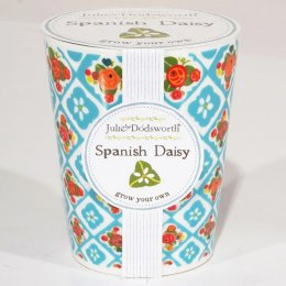 Julie Dodsworth Grow Your Own Ceramic Planter - Spanish Daisy