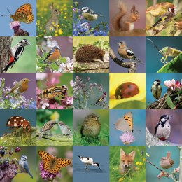RSPB Wondrous Wildlife Jigsaw - 1000 Pieces
