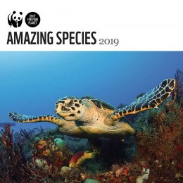 WWF Amazing Species 2019 Wall Calendar