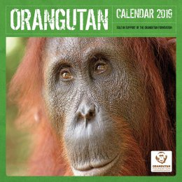 Orangutan Foundation 2019 Wall Calendar