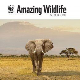 WWF Amazing Wildlife 2021 Wall Calendar