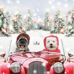 Driving Home For Christmas Charity Christmas Cards - Pack of 10