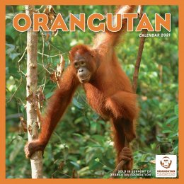 Orangutan Foundation 2021 Wall Calendar