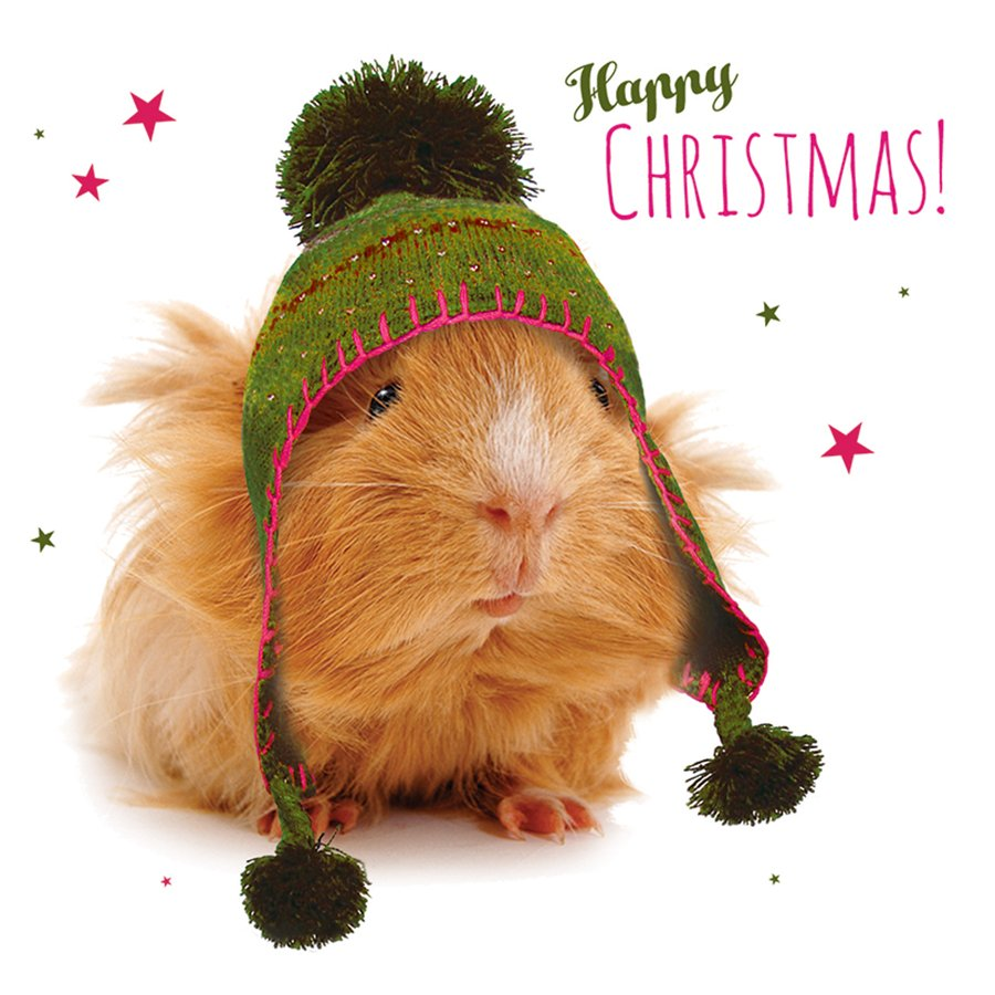 Cosy Guinea Pig Christmas Cards - 10 Pack - Natural Collection Select